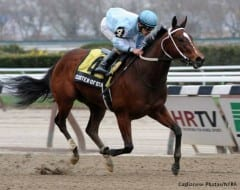Cluster of Stars named New York-bred Horse of the Year for 2013