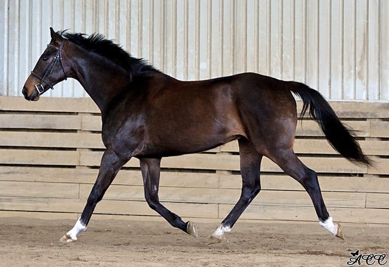 Ottb Showcase Comeonmoe A K A Quot Moe Quot Horse Racing
