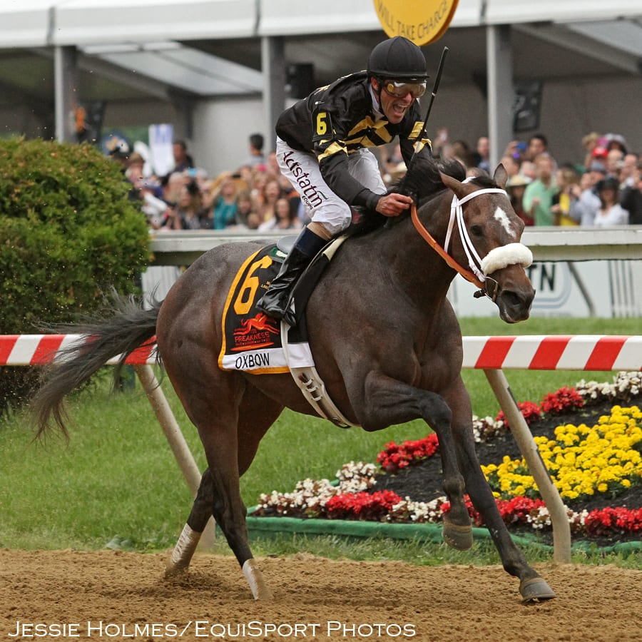 Oxbow charges to victory in 2013 Preakness Stakes