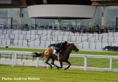 Animal Kingdom works at Ascot, photo: Andrew Motion
