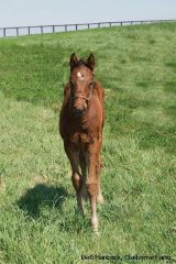KY Derby winner Orb as a foal at Claiborne Farm
