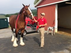 The world famous Budweiser Clydesdales will perform at Penn National this weekend