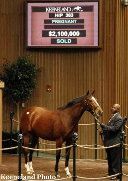 Love Me Only was carrying Storm The Stars at the time of her $2.1 million purchase at the Keeneland November Breeding Stock Sale