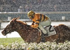Wise Dan braves the rain in the 2013 Firecracker Handicap en route to his second Horse of the Year title