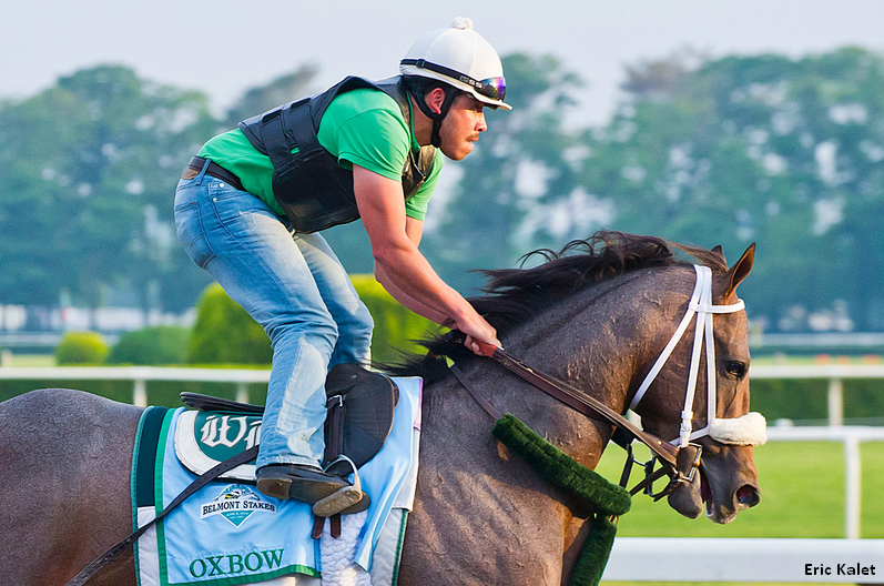 Oxbow gallops at Belmont Park prior to the Belmont Stakes