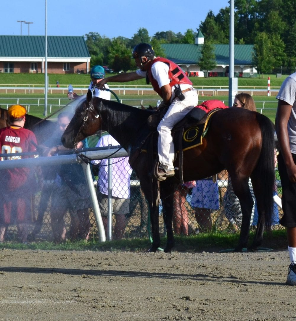 An outrider's pony gets a quick shower on a hot day at the track