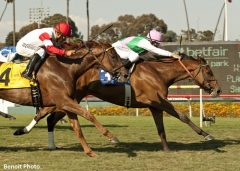 Emollient winning the 2013 American Oaks (G1). She will face Emotional Kitten once again in the Santa Ana Stakes (G2)