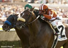 Keith Brackpool's Gervinho, seen here winning the Oceanside Stakes, will stand the 2015 breeding season at Tommy Town Thoroughbreds