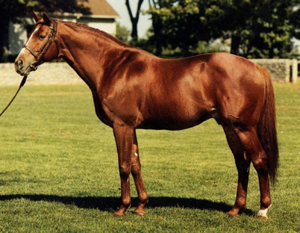 1970 Ky Derby Winner Dust Commander To Be Reinterred At Derby Museum Horse Racing