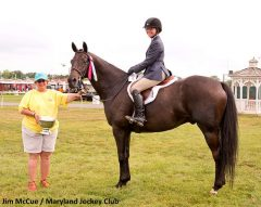 Houston Wins 2013 Totally Thoroughbred Horse Show. He will be competing once again July 13