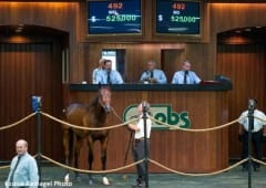 Hip 492, a Pioneerofthenile colt was a record-breaking $525,000 purchase by Semersky at OBS June