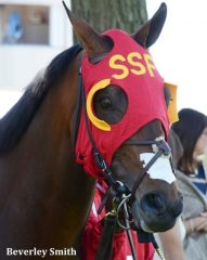 Up With the Birds will be one of two horses carrying the Sam-Son colors in Sunday's Queen's Plate