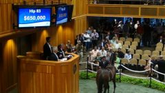 War Front filly sells for $650,000 on 2nd night of Fasig-Tipton Saratoga Sale