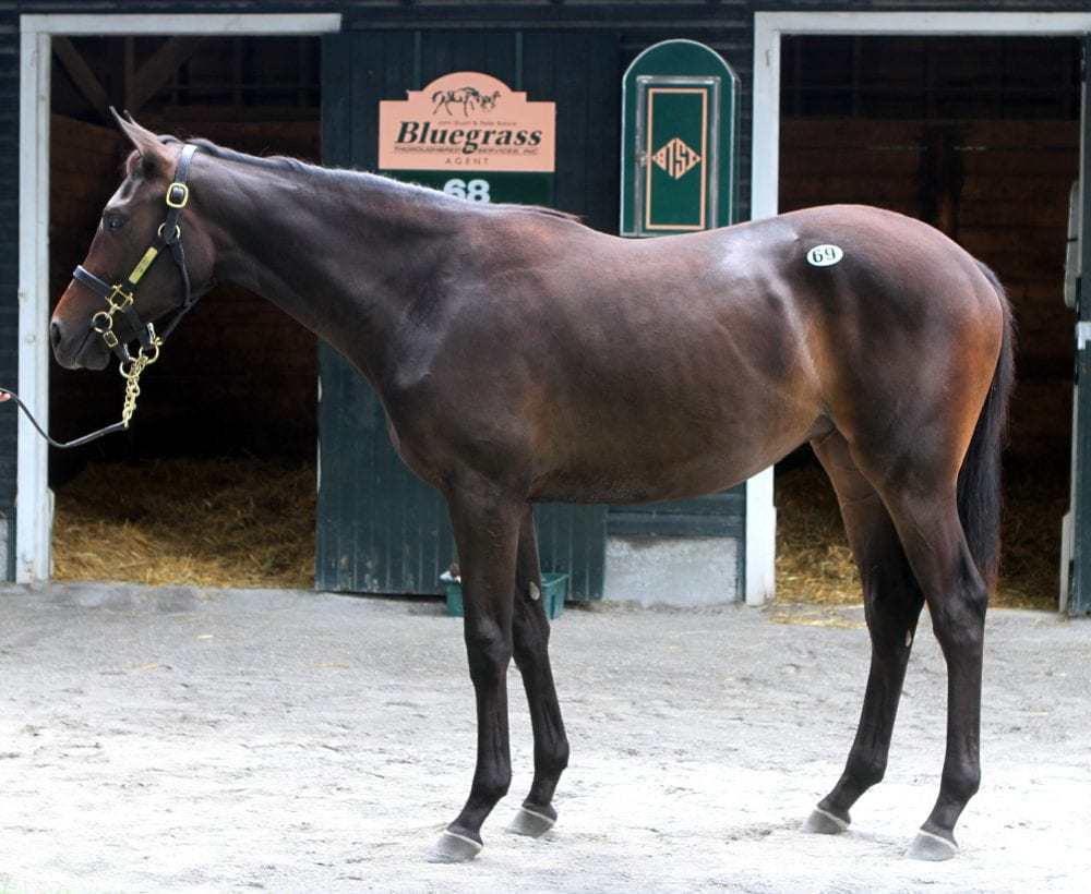 Hip 69, filly by Dynaformer - Indy Pick, by A.P. Indy. Sale-topper at $1,225,000