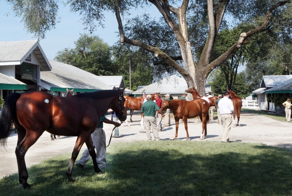 Buyers get a look at yearlings during the 2013 Keeneland September Sale