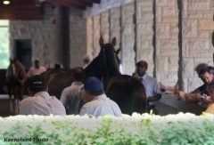 Tuesday was another busy day at the Keeneland September Yearling Sale