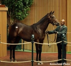 Colt by Medaglia d'Oro out of Loving Vindication sold for $385,000 to Lael Stables