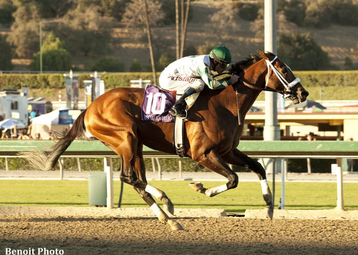 Mucho Macho Man wins the Awesome Again