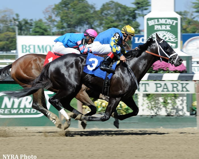 Shanghai bobby retires with suspensory injury horse for Show pool horse racing
