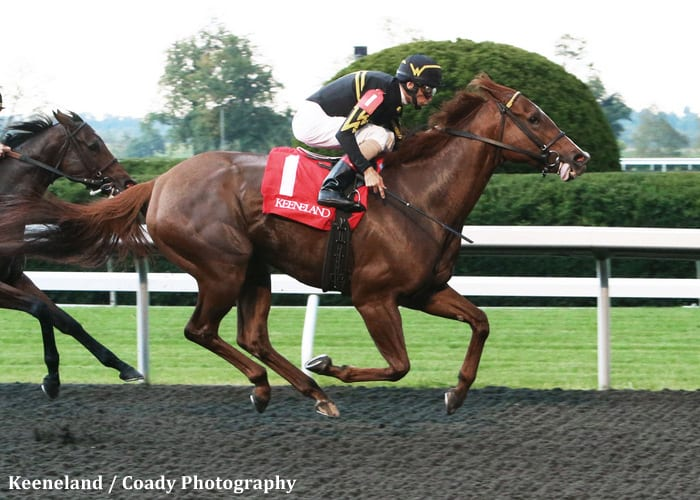 Filly Amp Mare Sprint Judy The Beauty Denies Groupie Doll