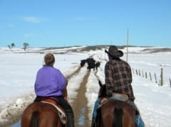Thasing's South Dakota Hay Bank will aid horse owners who find themselves without hay due to weather or economic hardship