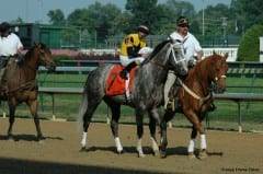 Flashy Bull prior to his win in the 2007 Stephen Foster Handicap