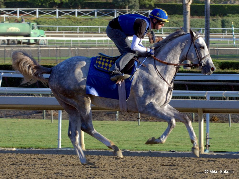 Tapit Son Flashback Retired To Hill N Dale Horse