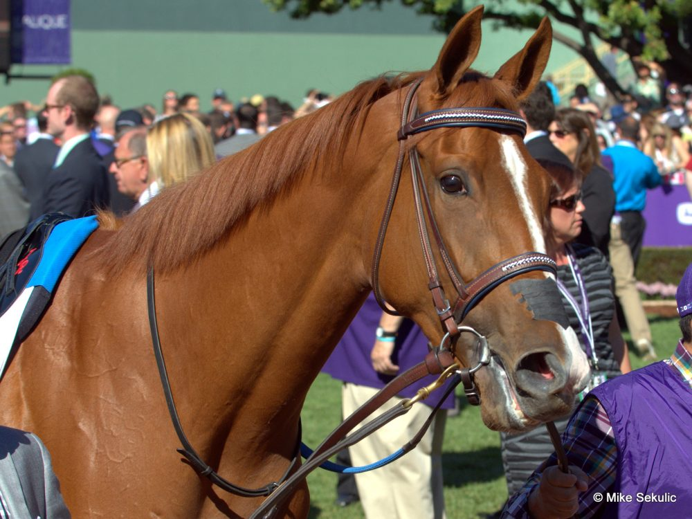 Critics Acclaim produced Grade 1 winner Rosalind (pictured)