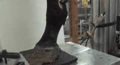 This device in the UC-Davis lab is used to simulate the limb motion of racehorses
