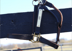 Orb's halter is for sale as part of the KyEHC auction