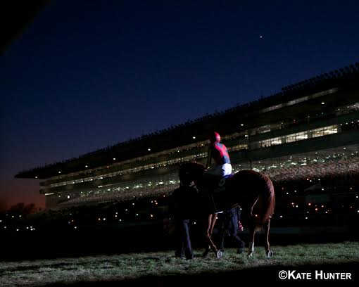 60,000 fans pay tribute to Orfevre at Nakayama Racecourse in Japan
