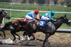 Zenyatta, #3, makes her move on the far turn in the 2008 Vanity