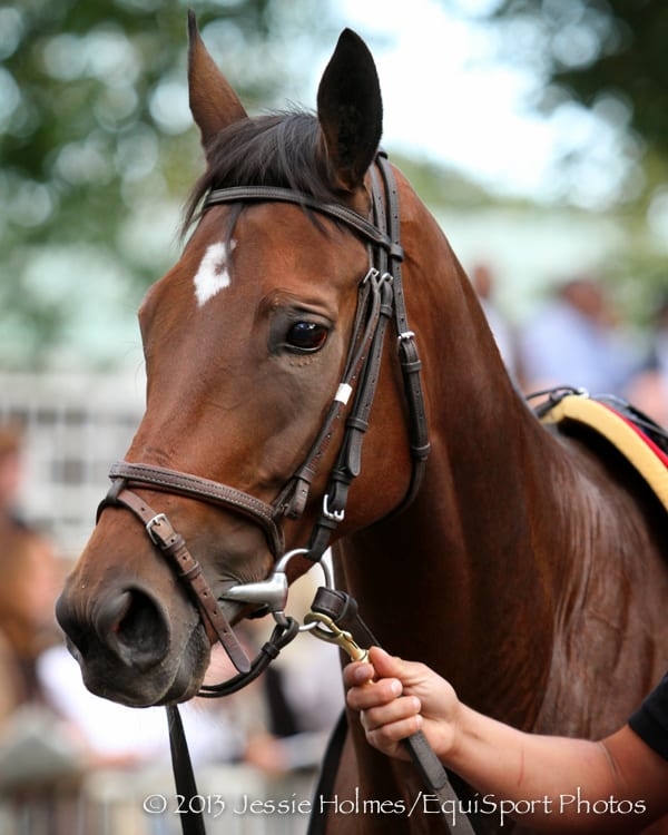 Laughing Dies In Colic Surgery Horse Racing News Paulick Report