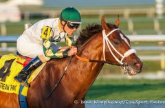 Mucho Macho Man in his Sunshine Millions Classic victory earlier this year
