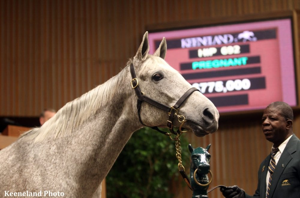 Hip 692, Ponche de Leona,  2014 Keeneland January Sale