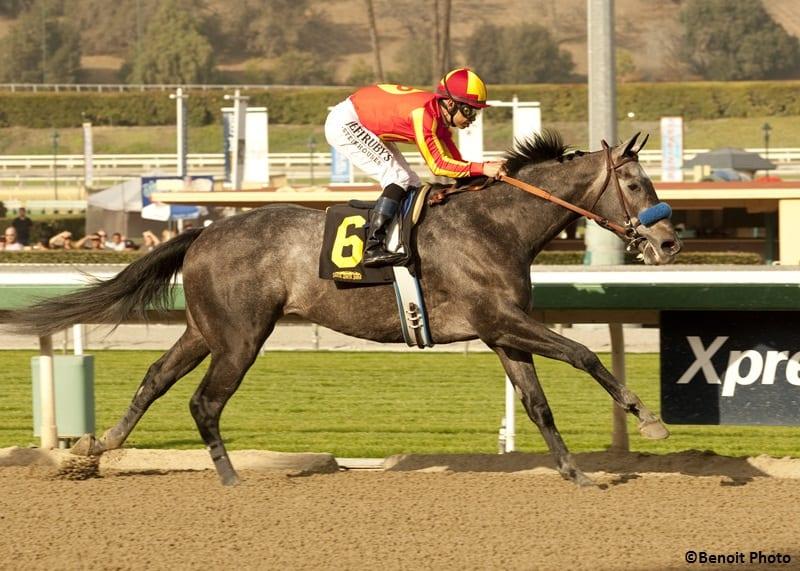 Midnight Hawk captured the G3 Sham Stakes in 2014