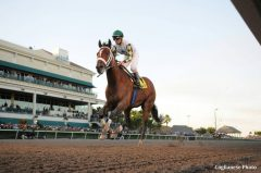 Mucho Macho Man in his Sunshine Millions Classic victory in 2014.