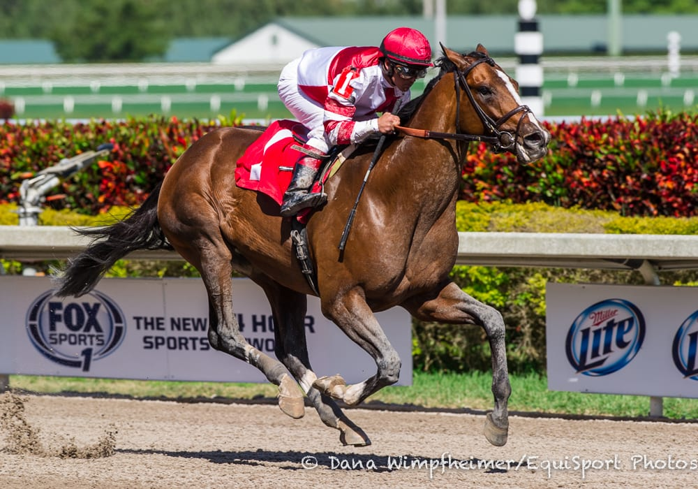 Bloodlines Winners Keep Coming For Tapit Horse Racing