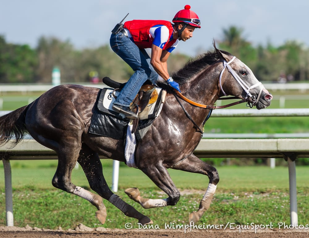 Havana Scratched From Swale Due To Quarter Crack Horse