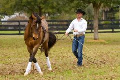 Dan James demonstrates long-lining with a young horse