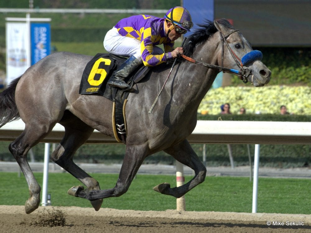 Kobe S Back On Track With San Vicente Victory Horse