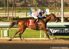 Bayern to stand for $15,000 live foal at Hill 'n' Dale