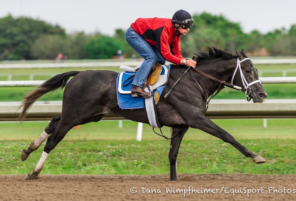 Cairo Prince General A Rod Work Toward Florida Derby