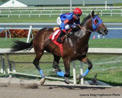 Social Inclusion cruises home in a Gulfsteam Park allowance race