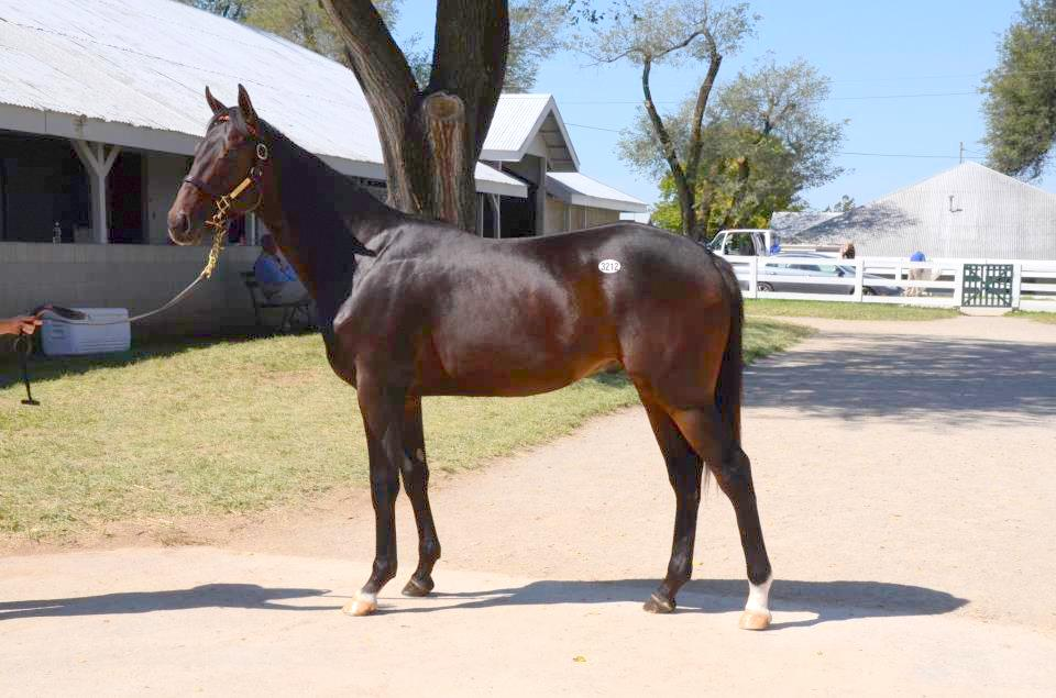 We Miss Artie as a yearling at Keeneland September