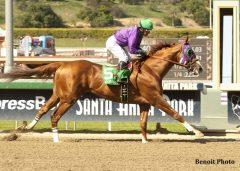 California Chrome at Santa Anita Park