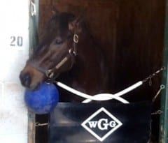 Ride On Curlin at home in Gowan's barn