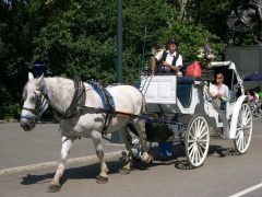 New York carriage horse