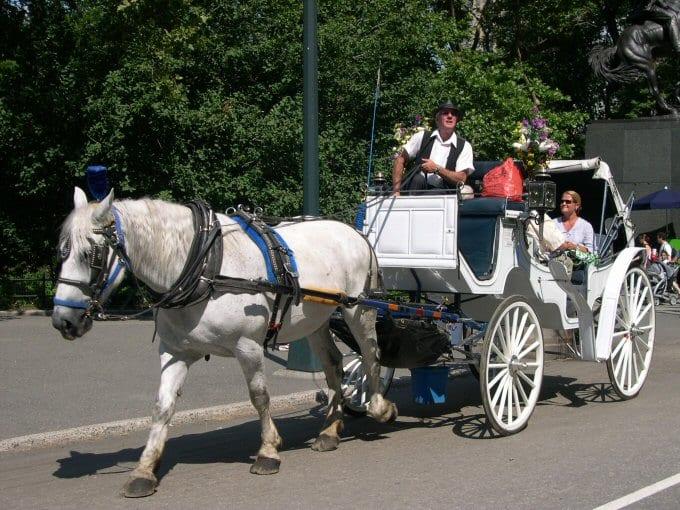 New York Carriage Horse Ban Put On Back Burner Horse