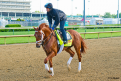 Danza post-gallop at Churchill Downs